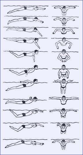 Схема движения способом дельфин