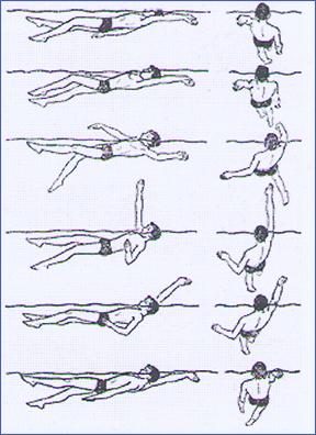 Сайт о плавании Техника плавания способом кроль на спине Схема движения кроль на спине