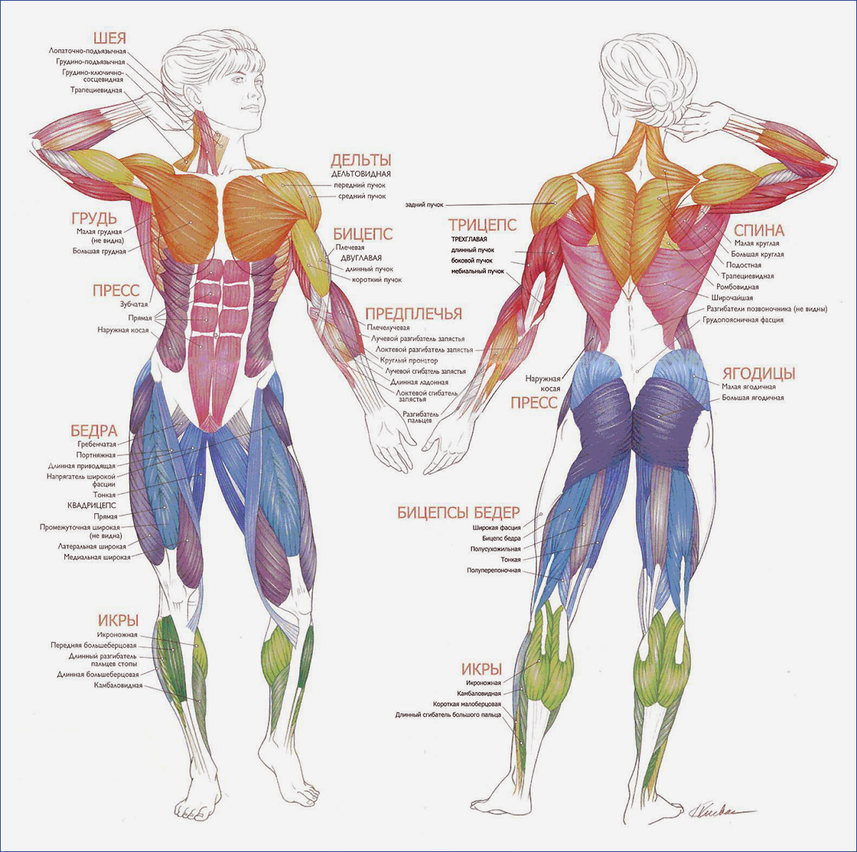 Суставы при плавании лечение артроза i плюснефалангового сустава