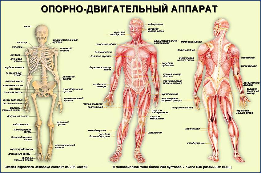 Мышцы кости суставы боль в височно-челюстном суставе и лечение